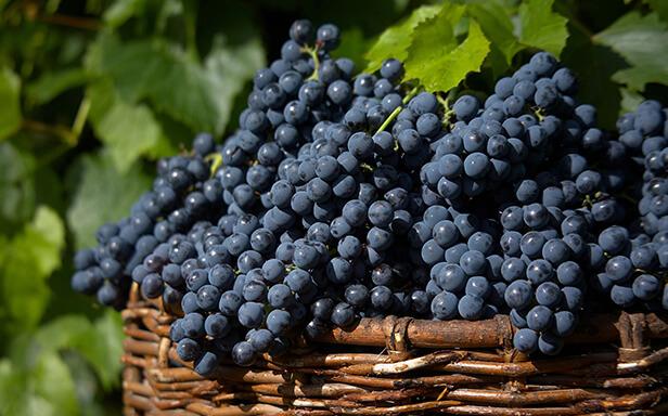 Analises de Vinho