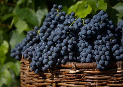 Produção de Vinho em Baixa