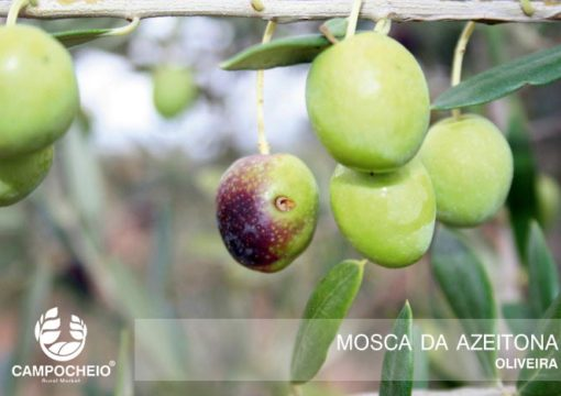 Aviso Agricola Dão Nº14/18