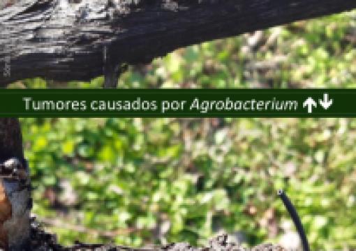 Aviso Agricola Douro e Minho Nº3/20